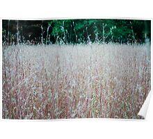 Luminescent Grass Poster