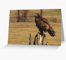 """Adolescent Eagle"" Greeting Card"