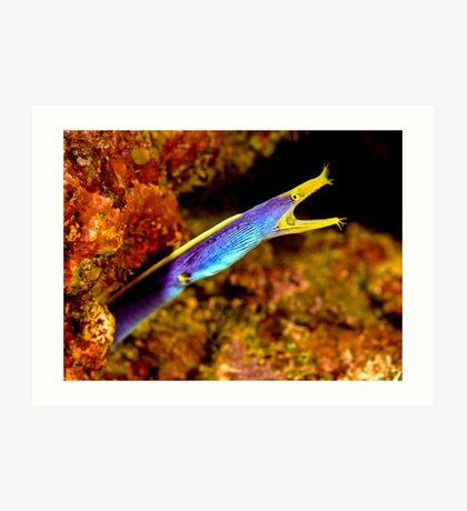 Blue Ribbon Eel - Somo Somo Strait - Fiji Art Print
