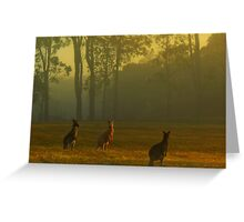 Roos in the back paddock Greeting Card