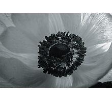 Floral Closeup Photographic Print