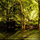 River Dart on Dartmoor National Park by Jay Lethbridge
