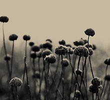 Field of Dreams by Olivia Joy StClaire