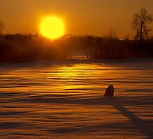 Sunrise Snowy Owl by Michael Cummings