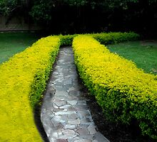 Hedge Rows And Stone Walkway by phil decocco