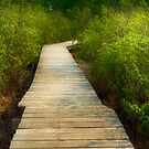 Serenity by Myron Watamaniuk