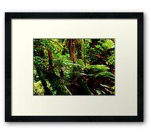 Rainforest in New Zealand Framed Print