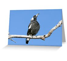 Australian (black-backed) Magpie ~ Singing My Song  Greeting Card