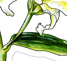 Lily Sticker