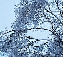 After the ice storm by Laurie Minor