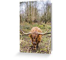 Highlander Greeting Card