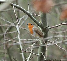 Robin by EmilyWednesday