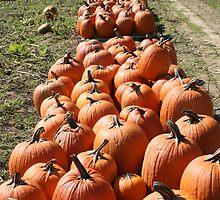 Pumpkins by Snapshotsandra