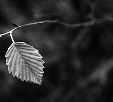Last autumn leaf by Arina Borevich