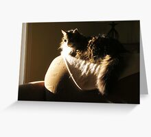 Main Coon Cat, Trouble Greeting Card