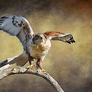Touch Down by Barbara Manis