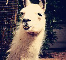 What The Llama by DDabug