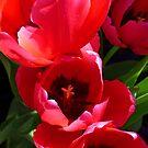 Red Tulips by WildestArt