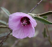 Purple Flower by BFearless