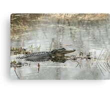 Gator Day Canvas Print