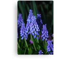 Bunch of Blue Blooming Flowers Canvas Print
