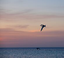 one last swim by Alenka Co
