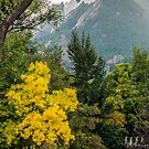 Fall For The Flatirons by nikongreg