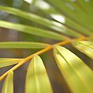 Tropical Frond by JazzaB