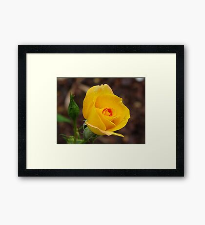 Yellow.... Framed Print