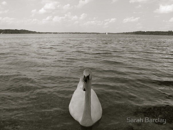 Swan Lake by Sarah Barclay