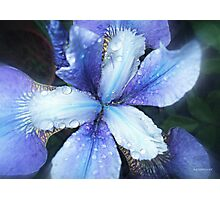 Why Does It Always Rain On Me! Photographic Print