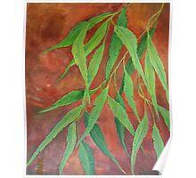 Eucalyptus Tears Poster