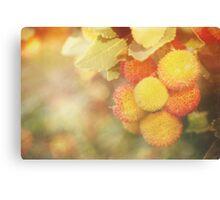 Irish Strawberries Canvas Print