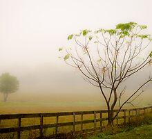 Early Morning Fog by Douglas Hamilton