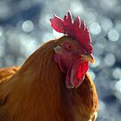 THE INTELLIGENT HEN by Betsy  Seeton