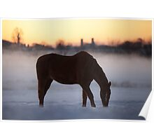 First Light on the Frosty Farm Poster