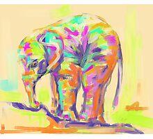 Wildlife baby elephant Photographic Print