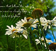 The flower that follows the sun does so even on cloudy days by Scott Mitchell