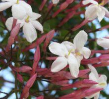 Pink Buds and Jasmine Blossom Close Up Sticker