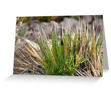 Chihuahuan Desert Plants-4 Greeting Card