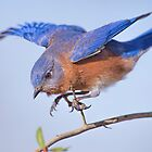 Little Blue Flying Machine by Bonnie T.  Barry