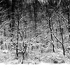 Winter Snow Trees by KellyHeaton