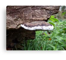 Fungi in the Woods Canvas Print