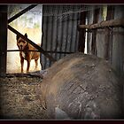 RUBY, THE GENTLE PIG, is not talking. by Barbara  Jean