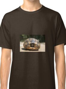Young Spur Thighed Tortoise Looking Out of Its Shell Classic T-Shirt