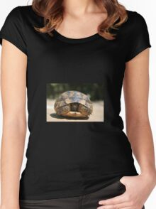 Young Spur Thighed Tortoise Looking Out of Its Shell Women's Fitted Scoop T-Shirt