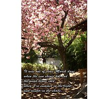 Inspirational Cherry Tree in Bloom Photographic Print