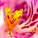 Alien Orchids by Susan Tong