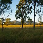 Morning light Biggenden Qld  Australia by Alison Murphy