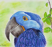 Blue Smiling Parrot on Green leaves Background by ibadishi